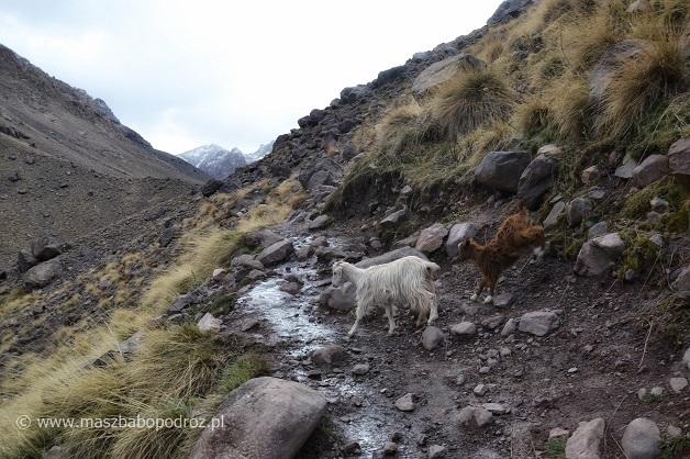 Kozy górskie. Maroko.