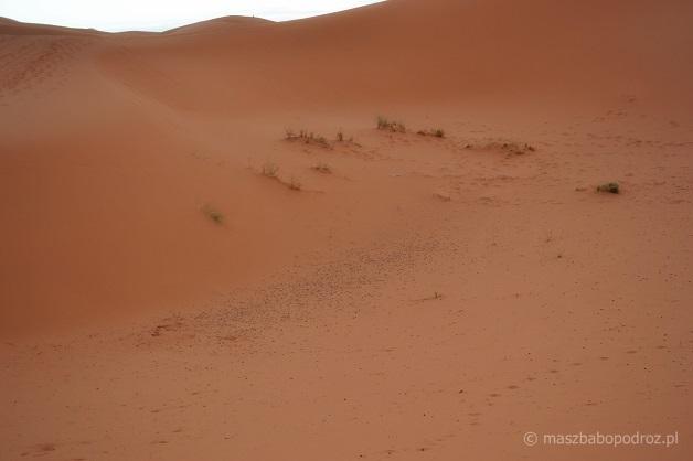 Pustynia - Maroko.