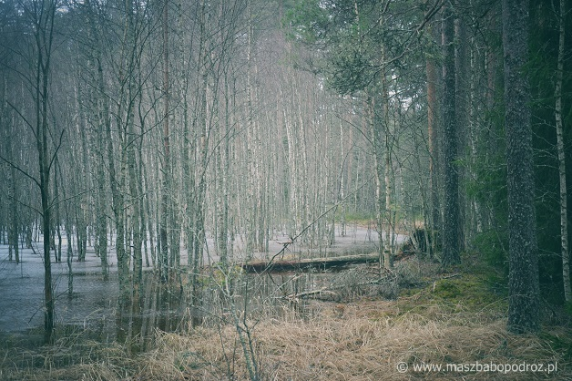 Park Narodowy Lahemaa, Estonia.