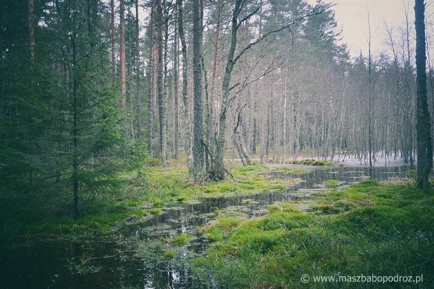 Park Narodowy Lahemaa.