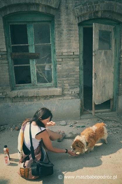 Chińskie psy