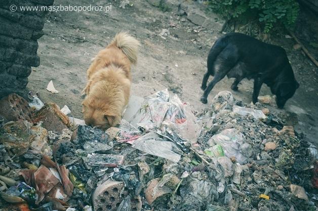 Jedzenie psów w Chinach