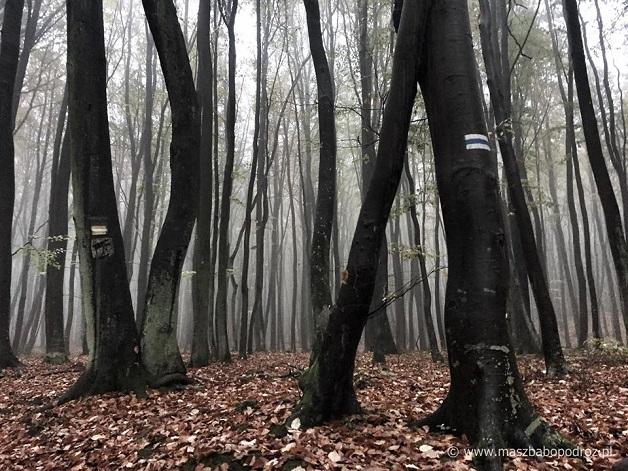 Las gdyński. Trójmiejski Park Krajobrazowy.